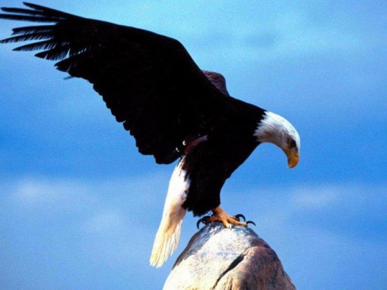simbolo de una pluma www.aretesparahombres.com